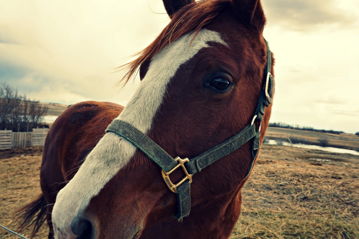 eCommerce website forEquestrian